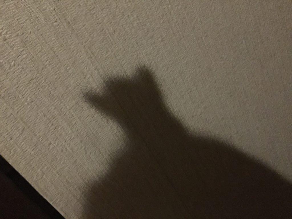 フクロモモンガの影